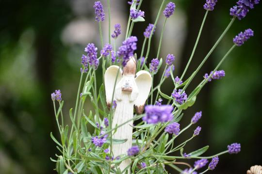 Angel in my lavender plant